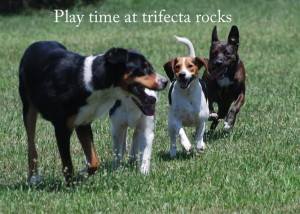 Playtime at Trifecta Rocks