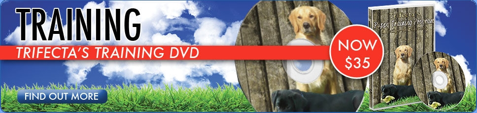 Get Our Training DVD