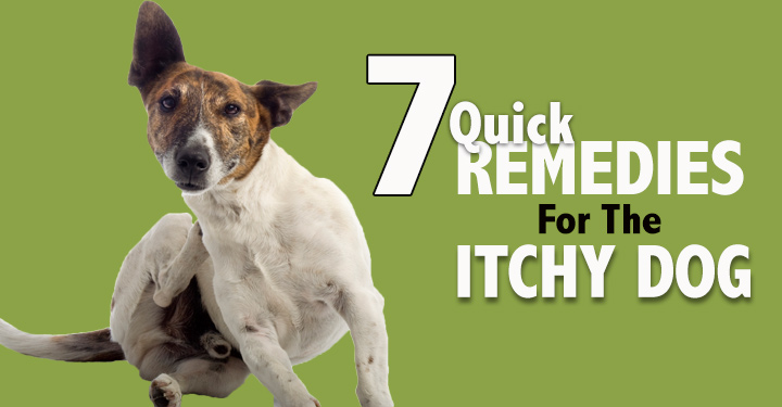 Remedies for Itchy Dogs