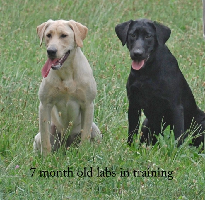 Labs in Training